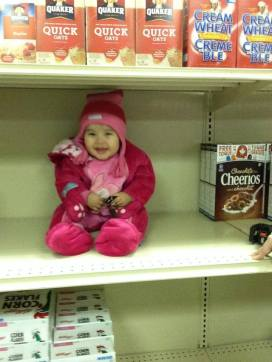 labrador food crisis baby on shelf